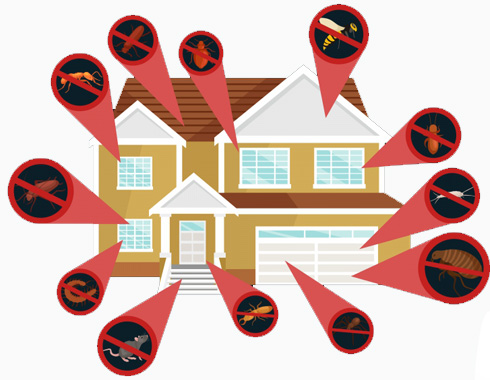 house termite inspection